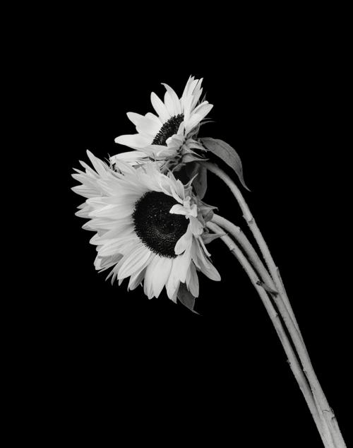 Dale M Reid Contemporary Fine Art Photography Floral Images
