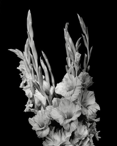 Dale M Reid Contemporary Fine Art Photography Artist