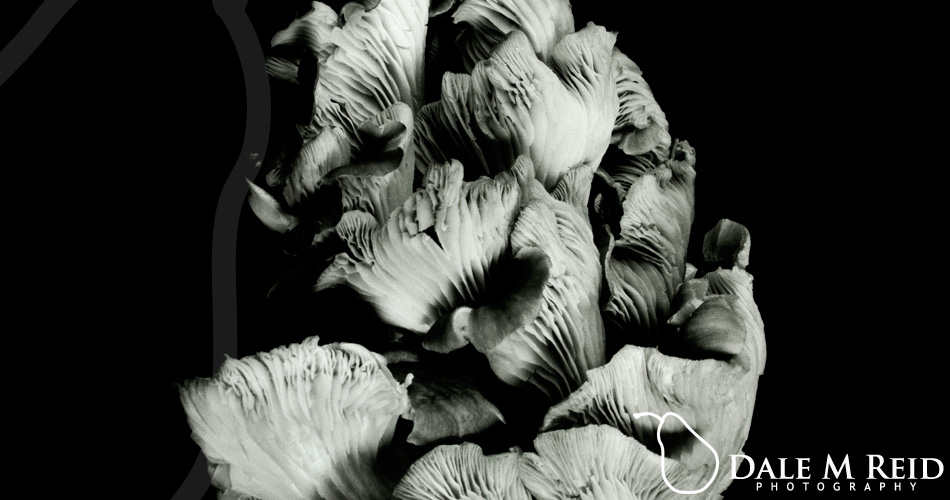 Dale M. Reid. Contemporary Fine Art Photography. Oyster Mushroom 45. detail. 2019.